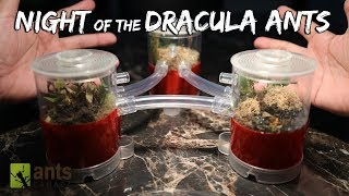 Download Night of the Dracula Ants - an Ant Halloween Musical Video