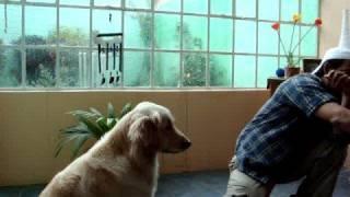 Download Como enseñar al Perro a sentarse con Entrenamiento Clicker Video