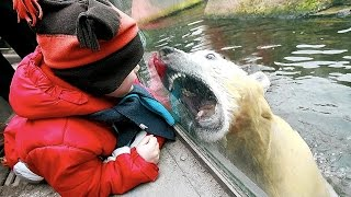 Download Zoo Animal Attacks ★ When Dangerous Animals Don't Know What Glass Is! [Funny Pets] Video
