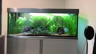 Download Ab wann können Fische in mein neues Aquarium?? Video