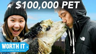 Download $17 Pet vs. $100,000 Pet Video