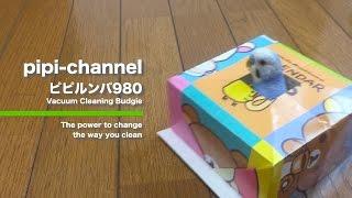 Download ピピルンバ980紹介ムービー(インコ版パロディ) Roomba Budgerigar [#021] Video