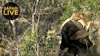 Download safariLIVE Sunset Safari 5, November 2019 Video