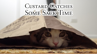 Download Custard Catches Some Sack Time Video