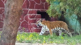 Download Ahmedabad, Gujarat 2k17 || Kankaria Video