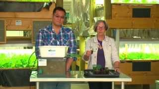 Download Aquaponics - How to Build Your Own Video