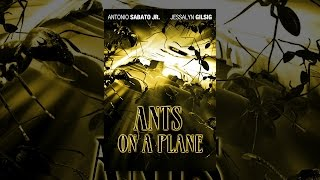 Download Ants On A Plane Video