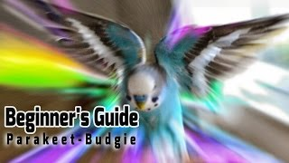 Download How to take Care of a Parakeet | Budgie [Beginner's Guide to Pet Birds] Video