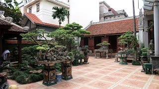 Download Thăm một sân cây cảnh và một nhà cổ đẳng cấp ở Hà Nội, mơ ước của nhiều người Video