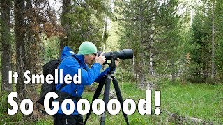 Download It Smelled So Good in the Woods! Wildlife Photography After the Rain Video