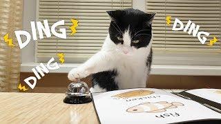 Download Waiter! Bring me food! Video