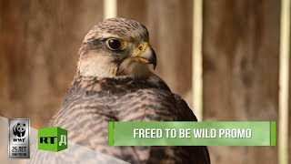 Download Freed to be Wild Promo: New documentary from WWF & RTD Video