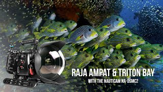 Download Raja Ampat and Triton Bay, Indonesia filmed in 8K with RED Weapon Helium and Nauticam Weapon LT Video