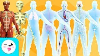 Download Los sistemas del cuerpo humano para niños - Recopilación Video