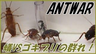 Download 蟻戦争#164 トゲオオハリアリVSゴキブリの群れ~かえりみない覚悟~編【English subtitles】~ant vs hordes of cockroaches~ Video