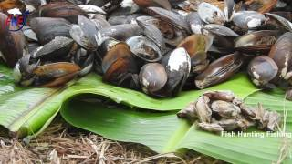 Download Bivalvia Catch n Cook | Scallap Escape | Fresh Water Oysters | Cockle | Bivalve | Oyster Shellfish Video