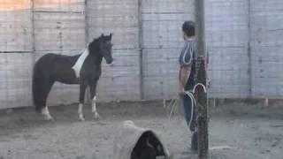 Download ADDESTRAMENTO CAVALLI. CORSO DI DOMA DOLCE I PARTE. HORSE TRAINING Video