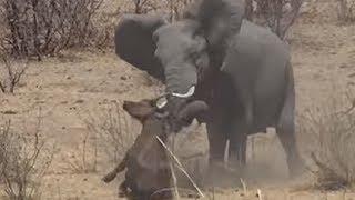 Download TOP 5 การปะทะโหดแผ่นดินสะเทือนของช้าง Elephant VS Buffalo Hippo Lion Crocodile Video