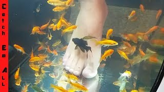 Download PET FISH FOOT SPA! **Fish Pedicure DIY** Video