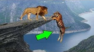 Download Vahşi Doğada Yakalanmış Şok Edici 5 Hayvan Savaşı Video