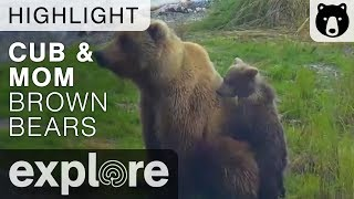 Download Cub Holds Onto Moms Tush - Brooks Falls - Live Cam Highlight Video