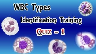 Download WBC Identification Training Quiz ( Part 1/3 ) Video