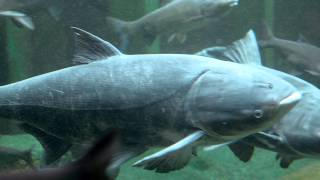 Download The High Stakes of the Great Lakes - Invasive Species Video