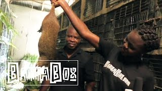 Download Nigerian Food: how to eat Giant Rat meat Video