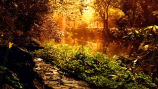 Download The Mysterious Forest Animated Wallpaper desktopanimated Video