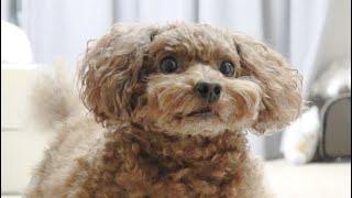 Download 퇴근한 주인이 집에왔다 바로나갔을때 강아지 반응 Video