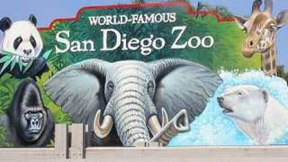 Download Visiting The San Diego Zoo (in HD) Video
