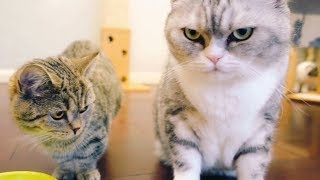 Download 万万没想到胖猫居然会为了吃的动手扇耳光,女主人刚说完哥哥不会打你的就被实力打脸! Video