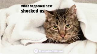 Download Kittens give sick Grandpa cat a reason to live! TinyKittens Video