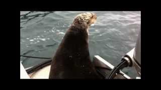 Download Alaska Killer Whales vs. Witty Otter Video