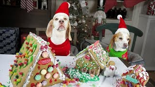 Download Dogs Build Gingerbread Village & Puppy Ruins it! Funny Dogs Maymo, Penny, & Potpie Video