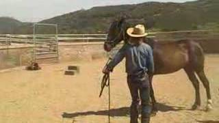 Download pepper the aggressive horse part one Video