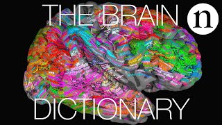 Download The brain dictionary Video