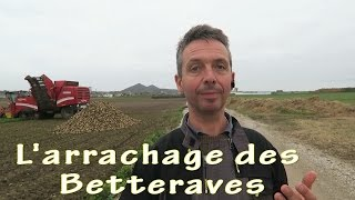 Download L'arrachage de betteraves. Video