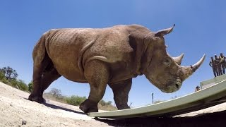 Download GoPro Cause: The Last of the Rhinos Video
