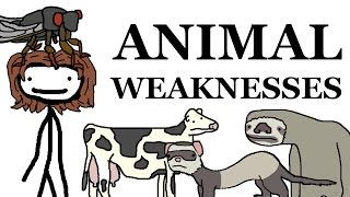 Download Animal Weaknesses Video