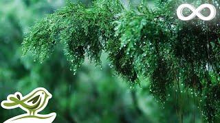 Download Relaxing Music & Soft Rain Sounds - Beautiful Piano Music for Sleeping, Studying & Relaxing Video