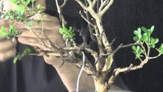Download Criss (Buxinho) vídeo 1 Video