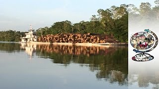 Download The Brazilian Locals Fighting Back Against Illegal Logging in the Amazon Video