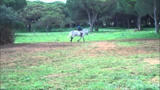 Download Domenico De Vitores (for sale) PRE stallion Video