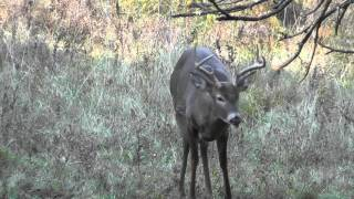 Download (GRAPHIC) Ground n pound... 6 point buck taken during 2015 archery season Video