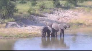 Download March 30, 2017- When you think nothing is going on at Djuma Waterhole- LOOK AGAIN Video