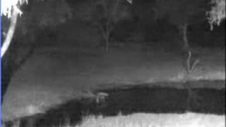 Download Lion Sounds at Elephant Plains - 07/09/10 - Pt 1 Video