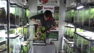 Download How to Build a Self Cleaning, BioActive Small Lizard Enclosure Video