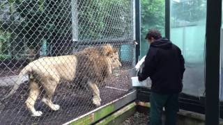 Download Feeding the Lions Video