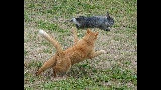Download Gato cazando un conejo - Cat hunting a rabbit Video